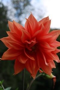 floral-designs-2