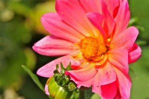 floral-designs-3