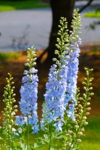floral-designs-5