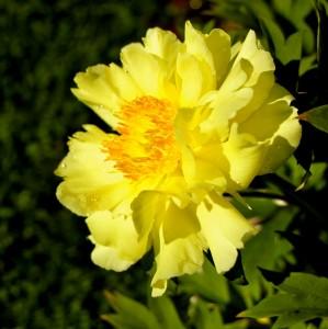 floral-designs-6